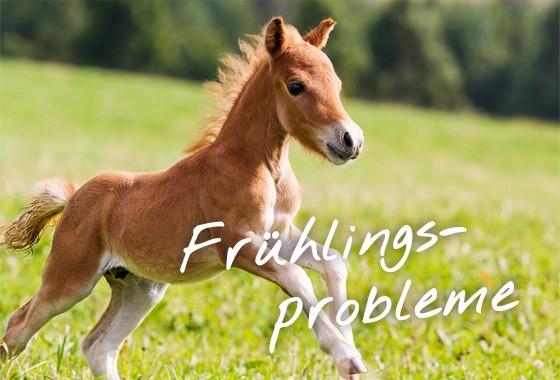 equines metabolisches syndrom fütterung